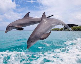 台灣兩大賞鯨活動地點推薦