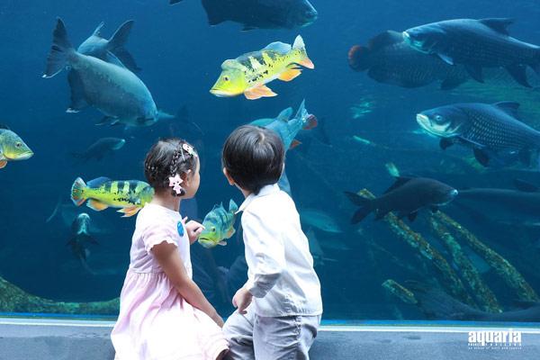 布吉新景點2019 布吉2019新開景點 布吉島新景點 布吉新開水族館 Aquaria-Phuket開幕