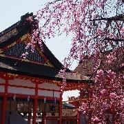 大阪京都夜景滿足一日遊(白須神社+錦市場+清水寺+伏見稲荷大社+京都塔)