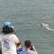 中華白海豚觀賞半日遊