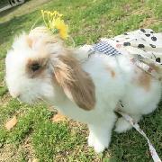 東京池袋Usabibi可愛兔子咖啡廳體驗(可包場+可自備飲食)