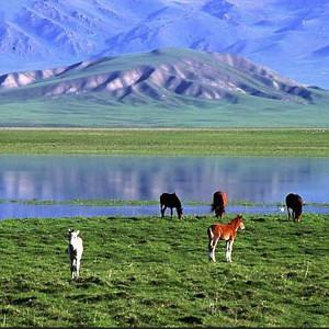 【藏地零距離 麗江 香格裏拉5日純凈之旅】更多充足時間欣賞雲南美景